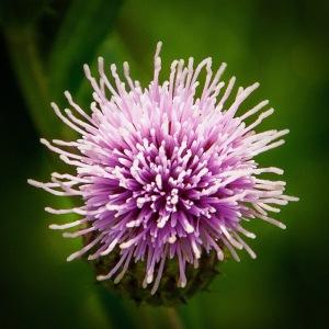 Weed or Misplaced Flower